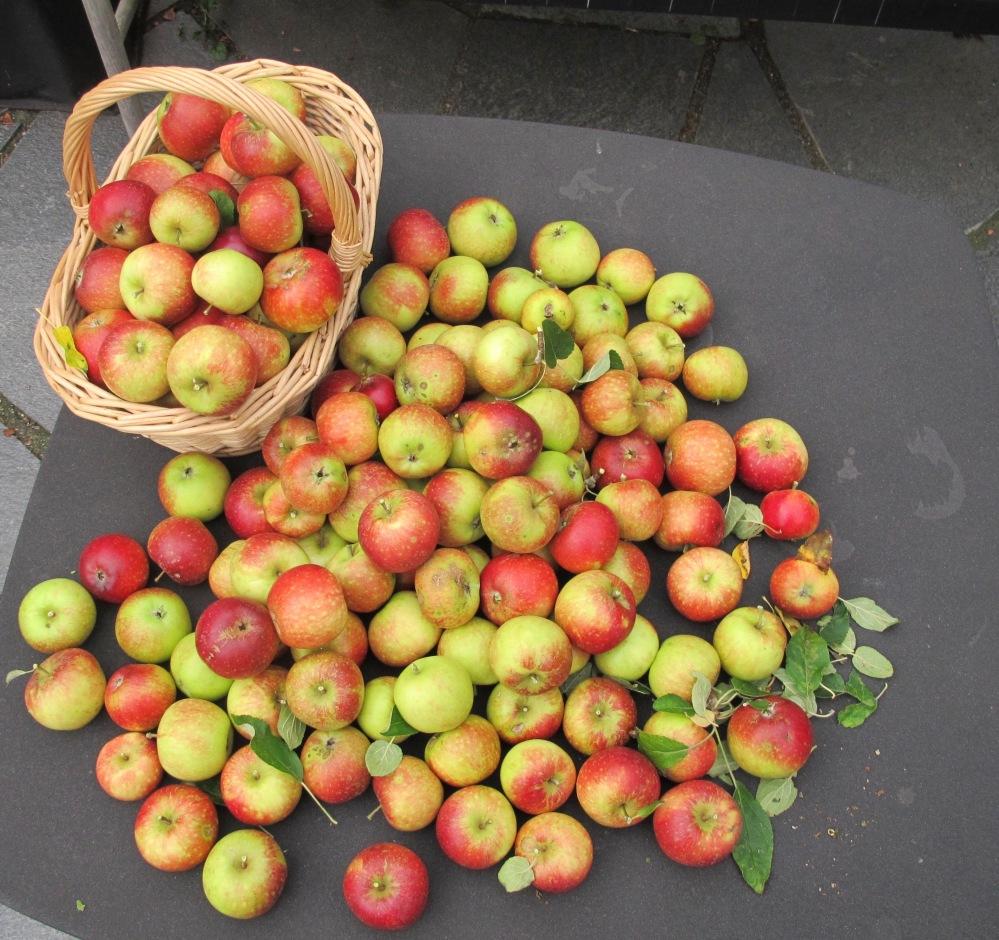 Äppletider5